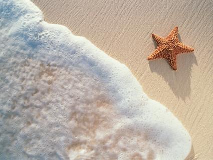 estrella de mar. Cuento de la estrella de mar