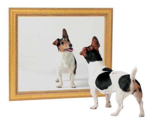 Historia para reflexionar: La casa de los espejos