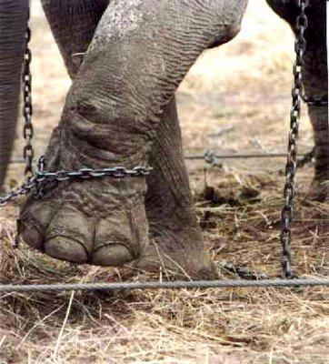 El elefante encadenado de jorge bucay for El elefante encadenado