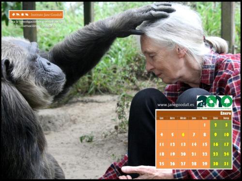 Calendario Instituto Jane Goodall Enero 2010