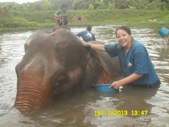 viajero emprendedor elefante