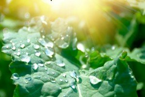 Leaf of grass with water drops in vivid sun rays. Morning after night rain.