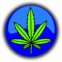 cannabis-490775_640